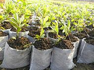 茂恒种植专业合作社