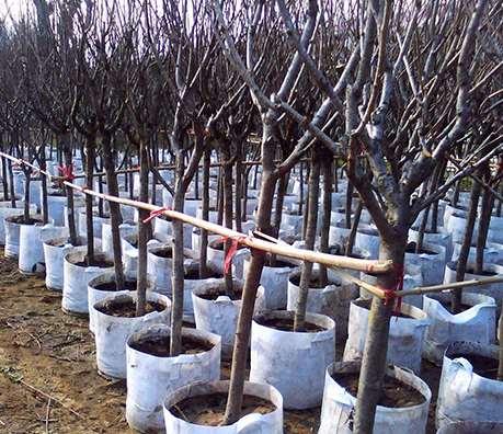 云南无纺布亚博体育官方app下载袋在葡萄种植中怎样应用