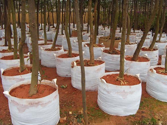 无纺布植树袋