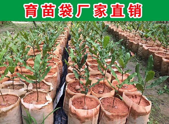 广东无纺布花盆袋