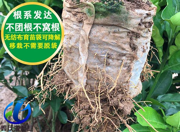 广东免脱袋亚博体育官方app下载袋