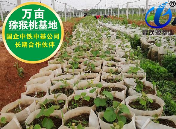 广东猕猴桃免脱袋亚博体育官方app下载袋